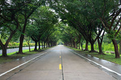 Road with tree both side Royalty Free Stock Image