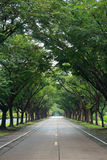 Road with tree both side Royalty Free Stock Photos