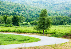 Road and tree in chiangmai Thailand.  royalty free stock photography