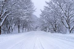 Road and tree covered by snow in winter Stock Photos