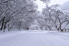 Road and tree covered by snow in winter Stock Image