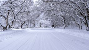 Road and tree covered by snow in winter Royalty Free Stock Photo