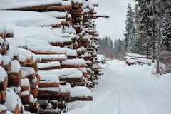 Road and tree felling in winter snowy forest Royalty Free Stock Images