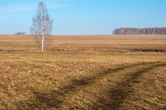 Road and tree on the field in early spring Stock Photos
