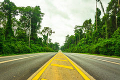 Road with tree in Krabi , Thailand.  royalty free stock photography