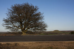 Road and tree. The tree at the roadside Royalty Free Stock Photography