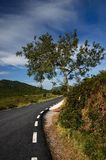 Road with tree and sky Royalty Free Stock Image