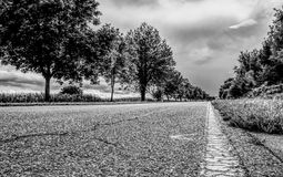 Road, Tree, Sky, Black And White stock photos