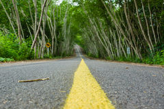 Road in tree tunnel. Mountain roads signs sky green grass in tree tunnel royalty free stock image