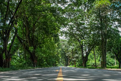 Road and tree tunnel. Road covered by green trees like a tunnel Royalty Free Stock Images