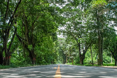 Road and tree tunnel. Road covered by green trees like a tunnel Stock Photo