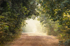 Road with tree tunnel. In the morning royalty free stock photos
