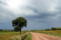 Road and tree under storm sky Stock Photos
