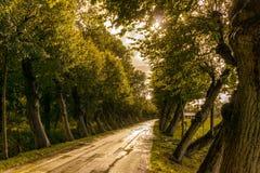 Road in Between Trees Stock Photo