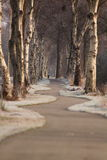 Road with trees royalty free stock images