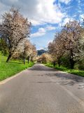 Road and trees. At during sunny day Stock Image