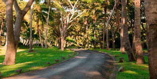 Road through the trees. Early morning golden hour looking through the coconut trees to the road into Denarau Island Royalty Free Stock Photo