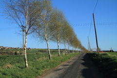 Road with trees. Road with birch trees besides royalty free stock images