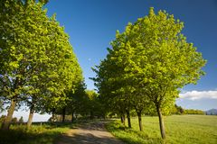 Road and trees Stock Photos