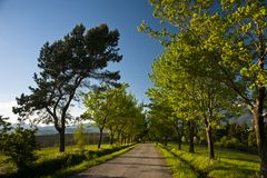 Road and trees Stock Image