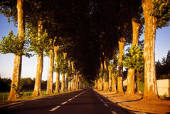 Road with trees Stock Photography
