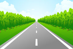 Road with trees Stock Image