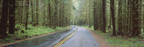 Road through the  trees Royalty Free Stock Photos