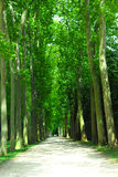 Road and trees Royalty Free Stock Image