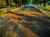 A road, trees along with both sides. A black road , and trees along with both of sides royalty free stock photo
