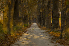 Road and trees in autumn. Stock Image