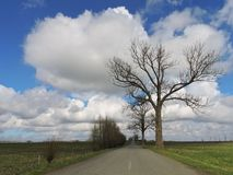 Road , trees and beautiful cloudy sky in morning, Lithuania Stock Photo