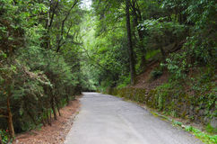 Road between trees. Beautiful landscape of a road in a forest Stock Image