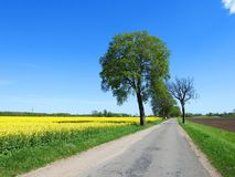 Road and beautiful spring  fields, Lithuania Royalty Free Stock Photos