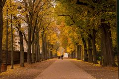Road with trees both side Royalty Free Stock Images
