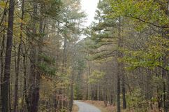 Road with trees both side. In fall season Royalty Free Stock Photography