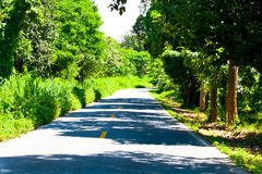 Road with trees on both sides Royalty Free Stock Images