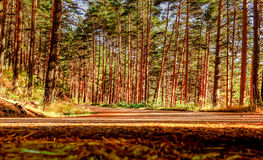 Road between the trees. Cotos mountain pass, Madrid. Spain Stock Photos