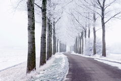 Road and trees on the countryside are covered with snow Royalty Free Stock Photos