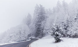 Road and trees covered with snow Royalty Free Stock Photo