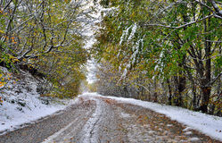 Road and trees covered with snow Royalty Free Stock Images