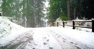 Road and trees covered with snow. During winter stock video footage