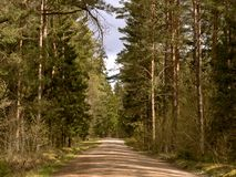Broad forest road, the road between the trees in a dense green forest, tall firs and other trees in the forest Stock Images