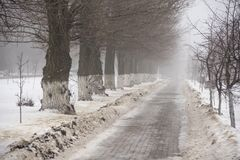 Road with trees disappearing in the fog stock image