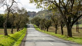 Road and trees. Dotted line royalty free stock photo