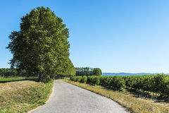 Road with trees in the field in Spain Royalty Free Stock Images