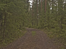 The road is among the trees of the forest Stock Photos