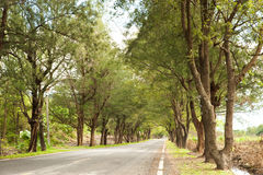 A road with trees Stock Image