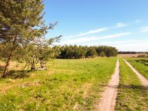 Road, trees, green grass. And arable fields Royalty Free Stock Photography