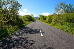 Road with trees in ireland. Road surrounded by trees in ireland Royalty Free Stock Images