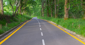 Road and trees in nature Royalty Free Stock Images